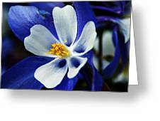 Colorado Columbine Greeting Card