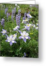 Colorado Columbines And Lupines Greeting Card