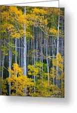 Colorado Fall Color Greeting Card