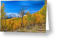 Colorado Fall Foliage Back Country View Greeting Card