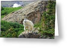 Colorado Mountain Goat Greeting Card