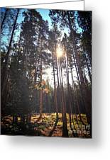 Colorado Pines Greeting Card