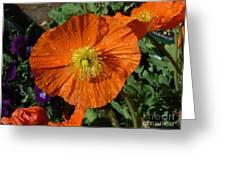 Colorado Poppy Greeting Card