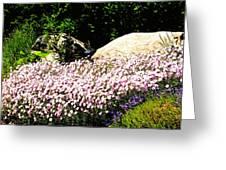 Colorado  Wild Flowers Greeting Card