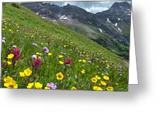 Colorado Wildflowers And Mountains Greeting Card by Cascade Colors