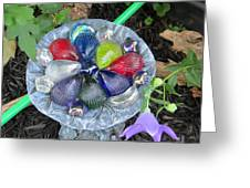 Colored Glass Shells Greeting Card