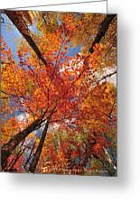 Colored Leaves Ground To Sky Greeting Card