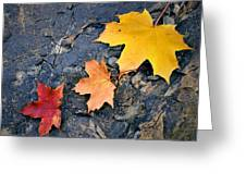 Colored Maple Leaf On Stone Greeting Card