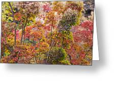 Colored Pallet Smoke Trees Greeting Card