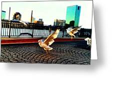 Colored Seagulls  Greeting Card