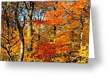 Colorfall Trees Greeting Card
