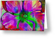Colorful African Violet Greeting Card