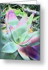 Colorful  Aloa Vera Greeting Card