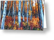 Colorful Aspens Greeting Card