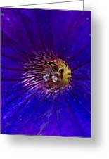 Colorful Attraction Greeting Card by Michael Sokalski