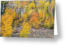 Colorful Autumn Forest In The Canyon Of Cottonwood Pass Greeting Card