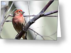 Colorful Bird In Winter Greeting Card by Susan Leggett