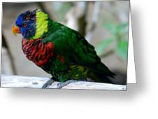 Colorful Bird  Greeting Card