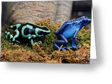 Colorful But Deadly Poison Dart Frogs Greeting Card