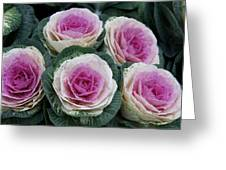 Colorful Cabbage  Greeting Card