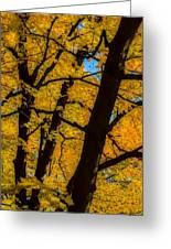 Colorful Canopy Greeting Card