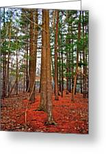 Colorful Carolina Forest Greeting Card