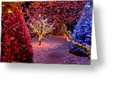Colorful Christmas Lights On Trees Greeting Card