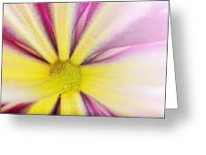 Colorful Clematis Greeting Card
