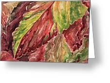 Colorful Coleus Greeting Card