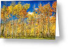Colorful Colorado Autumn Aspen Trees Greeting Card