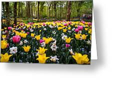 Colorful Corner Of The Keukenhof Garden 1. Tulips Display. Netherlands Greeting Card