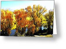 Colorful Cottonwoods Greeting Card