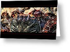 Colorful Crab Greeting Card