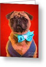 Colorful Dapper Pug Greeting Card