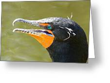 Colorful Double-crested Cormorant Greeting Card