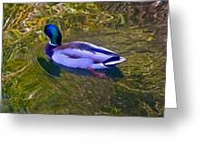 Colorful Duck Greeting Card