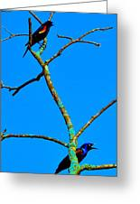 Colorful Duet Greeting Card