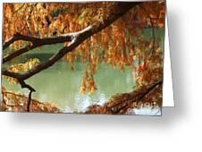 Colorful Fall Bald Cypress Greeting Card