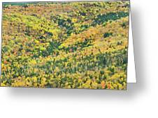 Colorful Fall Forest Near Rangeley Maine Greeting Card
