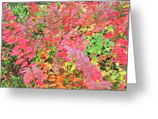Colorful Fall Leaves Autumn Crepe Myrtle Greeting Card