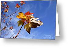 Colorful Fall Leave's With Blue Sky Greeting Card