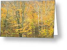 Colorful Fall Trees In Maine Greeting Card