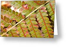 Colorful Fern Square Greeting Card