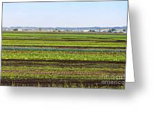 Colorful Fields Greeting Card
