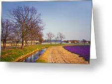 Colorful Fields Of Holland Greeting Card