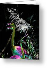 Colorful Flamingos Greeting Card