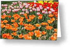 Colorful Flower Bed Greeting Card