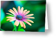 Colorful Flower Greeting Card by Tammy Smith