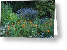 Colorful Flowers Along The Trail Greeting Card