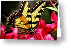 Colorful Flying Garden Greeting Card
